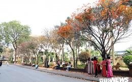 Ảnh: Con đường lá vàng rực rỡ giữa lòng Hà Nội hút hàng nghìn bạn trẻ