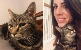 Câu chuyện chú mèo đi lạc 13 năm bất ngờ đoàn tụ với chủ cũ khiến dân mạng cảm động