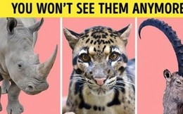 Số liệu cho thấy loài người đã làm gì: Chúng ta không còn được trông thấy những loài vật này nữa
