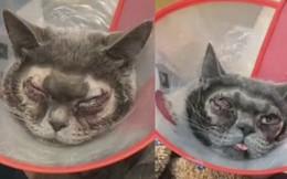 Chi 35 triệu đưa mèo xấu đi cắt mí, cô chủ Trung Quốc bị Internet lên án dữ dội