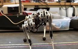 Xem những khả năng không ngờ tới của robot leo núi 'Mini Cheetah'