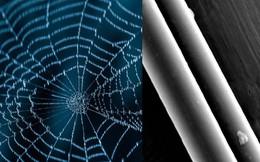 Tơ nhện có thể được tận dụng để tạo nên cơ bắp cho robot?