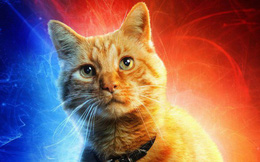 Đây, tất tần tật những gì cần biết về Goose - chú mèo siêu hot trong Captain Marvel