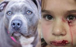 Bé gái vuốt ve chú chó ở sân bay, điều xảy đến tiếp theo khiến cả nhà hoảng loạn, chuyến đi bỗng biến thành ác mộng
