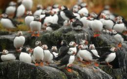 """Hòn đảo này có một loài chim siêu dễ thương, vừa trở về từ """"cõi chết"""" khiến giới khoa học vui mừng khôn xiết"""