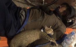 Chú mèo nhỏ nằm ngủ ngon lành trong vòng tay người đàn ông lang thang trên vỉa hè khiến nhiều người thương cảm
