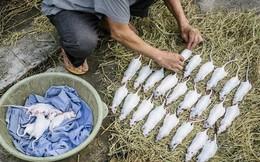 Tạp chí National Geographic lý giải thịt chuột được coi là đặc sản ở Việt Nam