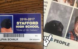 Chú chó bỗng nhiên nổi tiếng toàn thế giới nhờ xuất hiện trong ảnh kỷ yếu của một lớp học và câu chuyện đầy dễ thương phía sau