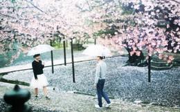 Thấy có quá nhiều sinh viên ế, trường ĐH này đã cho họ nghỉ 6 ngày chỉ để đi ngắm hoa, hẹn hò mùa xuân
