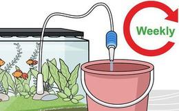 Để cá nuôi được khỏe mạnh, đừng bỏ qua việc chăm sóc cây cối đúng cách trong bể thủy sinh