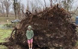 """Chuyện kinh dị có thật: Cậu bé hí hửng chụp ảnh gần gốc cây cổ thụ đã đổ, cây bất thình lình bật dậy """"nuốt chửng"""""""