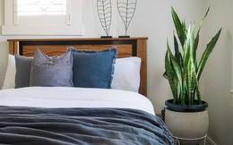 7 loại cây cảnh lọc không khí tốt nhất giúp nhà luôn sạch thoáng, trong lành