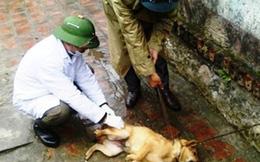 Bị chó nhà cắn chủ quan không đi tiêm phòng, 2 bố con tử vong thương tâm
