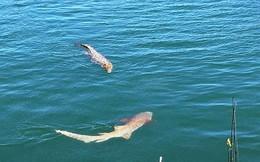 Câu cá mập ở Trường Sa