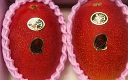 """Nhật Bản quả là nơi bán trái cây đắt nhất hành tinh: Đây là cặp xoài """"trứng mặt trời"""" có giá kỷ lục hơn 100 triệu đồng"""