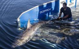Thà một lần chơi lớn: Khoa học giờ dùng đến cả vệ tinh để giúp cá mập không bị tuyệt chủng