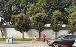 Nhìn xa tưởng cảnh bà cháu dắt chó đi dạo, nào ngờ đến gần dân tình lại được phen cười bò khi phát hiện sự thật