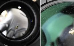 Một con ruồi chui vào ống kính camera 40 triệu, khổ chủ méo mặt mất thêm 9 triệu tiền sửa