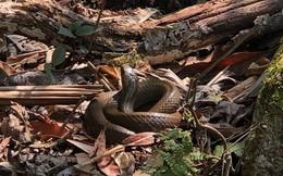 Dựng tóc gáy vào khu rừng lúc nhúc rắn độc trên dãy Hoàng Liên Sơn