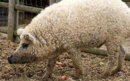 Loạt ảnh động vật 'gây lú' mà bạn phải nhìn đi nhìn lại mới biết nó rốt cuộc là con gì