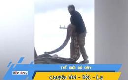 Video: Hoảng hồn phát hiện trăn 5,5m bò trên mái nhà