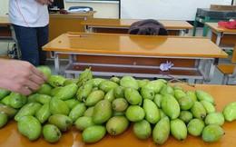 """Đỉnh cao """"xoài tặc"""" là đây: Sinh viên Bách Khoa chứa nguyên cả một hộc bàn đầy xoài!"""