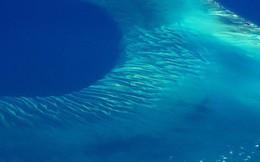 Có một thứ gì đó rất khổng lồ đang... huýt sáo dưới biển Caribbean mà khoa học đang đau đầu tìm hiểu