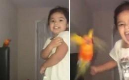 Bé gái huấn luyện vẹt tấn công người khác bằng tiếng hét nổi tiếng khắp MXH chỉ sau 1 đêm