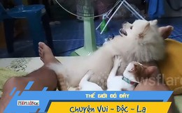 Chú chó sung sướng khi được mèo massage