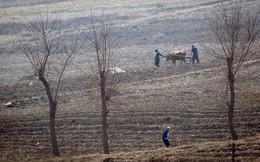 10 triệu người Triều Tiên đối mặt nạn đói sau vụ mùa thất bát