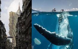 30 khoảnh khắc đẹp đến nghẹt thở từ vòng chung kết Cuộc thi ảnh Du lịch Địa lý Quốc gia 2019