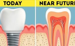 Không phải trồng răng giả nữa: Khoa học đã tìm ra cách giúp bạn mọc lại răng mới chỉ sau 2 tháng