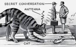 """CIA chế tạo điệp viên """"Mèo Robot"""" mất mấy năm mới xong, vừa thả ra đường đã bị ô tô đâm chết"""