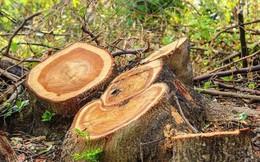 Loạt ảnh cho thấy cách con người đối xử với những cánh rừng trên thế giới tệ bạc đến mức nào