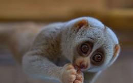 Top 10 loài động vật có bề ngoài vô hại nhưng cực kỳ nguy hiểm (Phần 1)