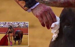 Clip: Đấu sĩ lau máu và nước mắt cho bò tót trước khi kết liễu khiến cộng đồng mạng dậy sóng