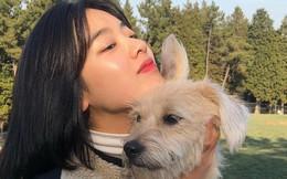 Khoe giấy siêu âm của cún cưng, cô nàng bỗng mang danh 'không chồng mà chửa', tất cả chỉ vì nhân vật này