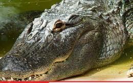 Người đàn ông tử vong do bị cá sấu cắn đứt dương vật