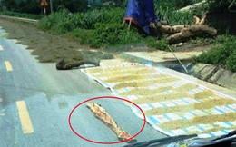 Thực hư hình ảnh nông dân phơi lúa kèm rải chông đinh trên đường ở Nghệ An