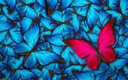 Hiệu ứng cánh bướm và những câu chuyện vô cùng khó tin nhưng có thật