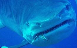 Từ vài bãi nôn của cá mập, khoa học phát hiện chúng ăn một thứ không ai có thể ngờ đến