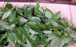 Chữa đổ mồ hôi trộm, táo bón ở trẻ em bằng cây rau ngót