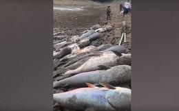 Video: Kinh ngạc khi vớt được hàng chục xác cá trê khổng lồ