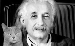 Người nuôi mèo thông minh hơn, nhưng người nuôi chó lại dễ tồn tại trong xã hội và đây là lý do