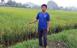Ninh Bình: Kẻ xấu dùng chông sắt cắm đầy ruộng, phá máy gặt lúa