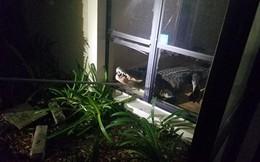 Cá sấu dài hơn 3m phá cửa sổ lẻn vào nhà trong đêm khiến người dân khiếp vía