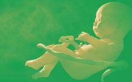 2 em bé chỉnh sửa gene từng gây tranh cãi dữ dội tại Trung Quốc đang có nguy cơ chết sớm