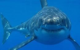 """Ngắm công trình chế tác """"Siêu cá mập"""" khiến người xem không khỏi ngỡ ngàng vì độ khủng của nó"""