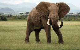Những động vật lớn có thể biến mất trong 100 năm tới