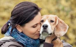 Bị trộm vào khoắng sạch đồ trong nhà, chàng trai chỉ xin được trả lại ảnh của cô chó đã mất